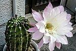 /blogimg.goo.ne.jp/user_image/73/b8/ff77c216971d0813118dfafe795b3b45.jpg