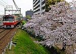 /stat.ameba.jp/user_images/20180406/22/dinopapa/e3/5c/j/o1000070714165467458.jpg