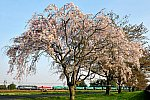/blogimg.goo.ne.jp/user_image/41/4a/bbe0168c9160b9aec07abc050ee605c6.jpg