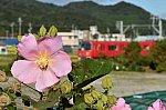 /blogimg.goo.ne.jp/user_image/7c/d8/99da13a584df39b1ea00de6db3b3b359.jpg