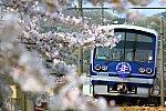 190407_駿豆線_HPT桜アップ_Bランク