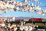 /blog-imgs-126.fc2.com/f/u/j/fujic57loco/730A1206b.jpg