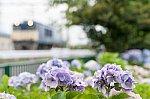 20150705-DSC_3906_edit.jpg