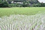 /blog-imgs-127.fc2.com/m/a/m/mametsubukishapoppo/20190616221822351.jpg