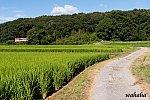 010813sintetsu_onoichiba-1.jpg