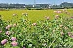 /blogimg.goo.ne.jp/user_image/37/c0/5e39209bdfc960b3d30b203cd8e272d1.jpg