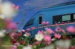 /blog-imgs-131.fc2.com/9/2/8/928500pollippy/IMG_5208blg.jpg