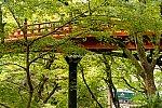 011022sanin_yabu_mizukaze_.jpg