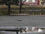 /stat.ameba.jp/user_images/20200128/05/dinopapa/f1/11/j/o1000075014703458451.jpg
