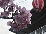 /stat.ameba.jp/user_images/20200227/19/westband2/53/05/j/o0605045414719900482.jpg