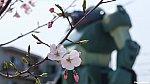 /stat.ameba.jp/user_images/20200322/17/tamagawaline/78/8c/j/o1920108014732094878.jpg