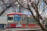 200321_多摩湖線_赤電桜と