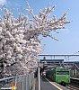 /stat.ameba.jp/user_images/20200330/22/tamagawaline/8d/29/j/o0961108114736348258.jpg
