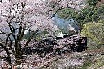 /stat.ameba.jp/user_images/20200401/03/iiwakunsl/ad/ea/j/o0600040014736881493.jpg
