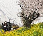 /stat.ameba.jp/user_images/20200405/11/mako3388/73/72/j/o1704144214738934534.jpg