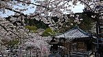 /stat.ameba.jp/user_images/20200407/00/goyohkiki/3b/df/j/o1080060714739845415.jpg