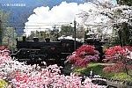 /stat.ameba.jp/user_images/20200513/08/iiwakunsl/57/dd/j/o0600040014757927454.jpg