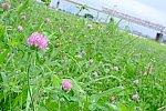 /stat.ameba.jp/user_images/20200625/18/1229lokon/43/7d/j/o1240082714779583372.jpg