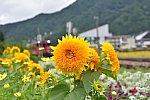/blogimg.goo.ne.jp/user_image/3d/78/149eac539c9bfa8eadfcd35e3c792eba.jpg
