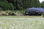 /stat.ameba.jp/user_images/20200925/18/cavacho/7a/71/j/o2000133314825106522.jpg