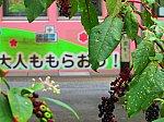 /stat.ameba.jp/user_images/20200928/21/michanyuriyuri/e8/84/j/o0960072014826760335.jpg