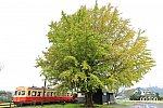/railrailrail.xyz/wp-content/uploads/2020/11/IMG_6118-2-800x534.jpg