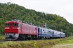 IMGP9653-1.jpg
