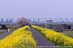 江戸川沿い 202103