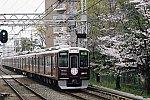 20210330-1402f-kyoto-kawaramachi-semi-exp-sakura-hm-minamiibaraki_IMGP1007m.jpg