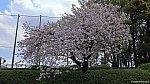 /stat.ameba.jp/user_images/20210403/22/tamagawaline/fe/8a/j/o1920108014920796579.jpg