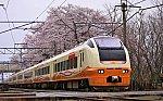 IMG_0922 高田花見