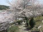 2021.3.29 (30) 桜山 - 欣浄寺 2000-1500