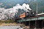 桜とC11 190大井川鐵道SLかわね路1号
