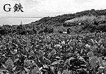 197007☆☆美々津遠見D51カンナ