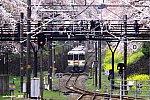 313系 谷峨~山北 2009.04.04