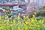 /blog-imgs-137.fc2.com/m/a/m/mametsubukishapoppo/202104030244243ec.jpg