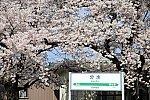 /stat.ameba.jp/user_images/20210412/20/yamabato6/78/9d/j/o0600040014925447761.jpg