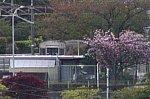 /stat.ameba.jp/user_images/20210413/19/yakanisi-4786/15/55/j/o0668044514925895247.jpg