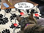 kotatsu2021-2.jpg