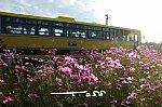 /blogimg.goo.ne.jp/user_image/36/c7/3ae97b4815134c7904259e5407871976.jpg