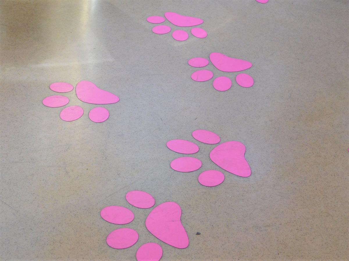 床面には猫の足跡がデザインされています
