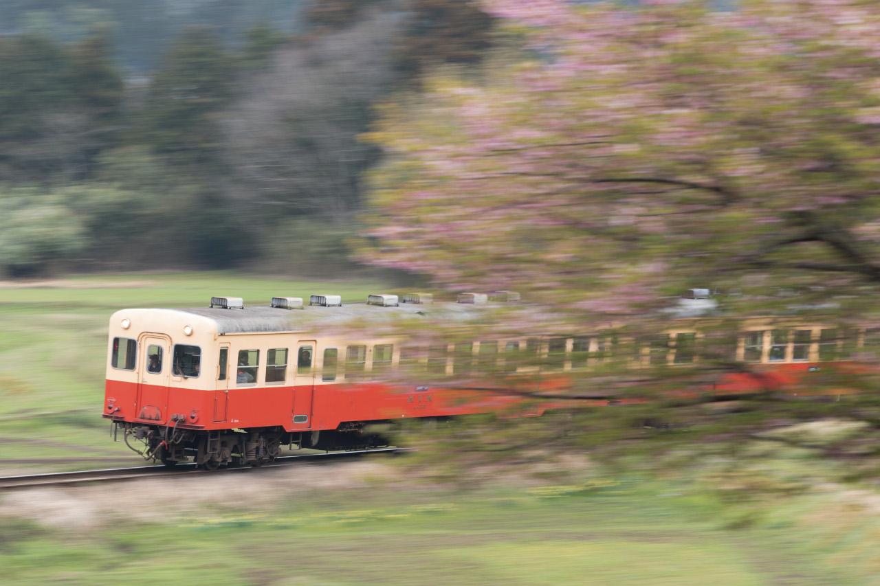 桜を手前に配置した流し撮り。列車を主題に、桜を流しています