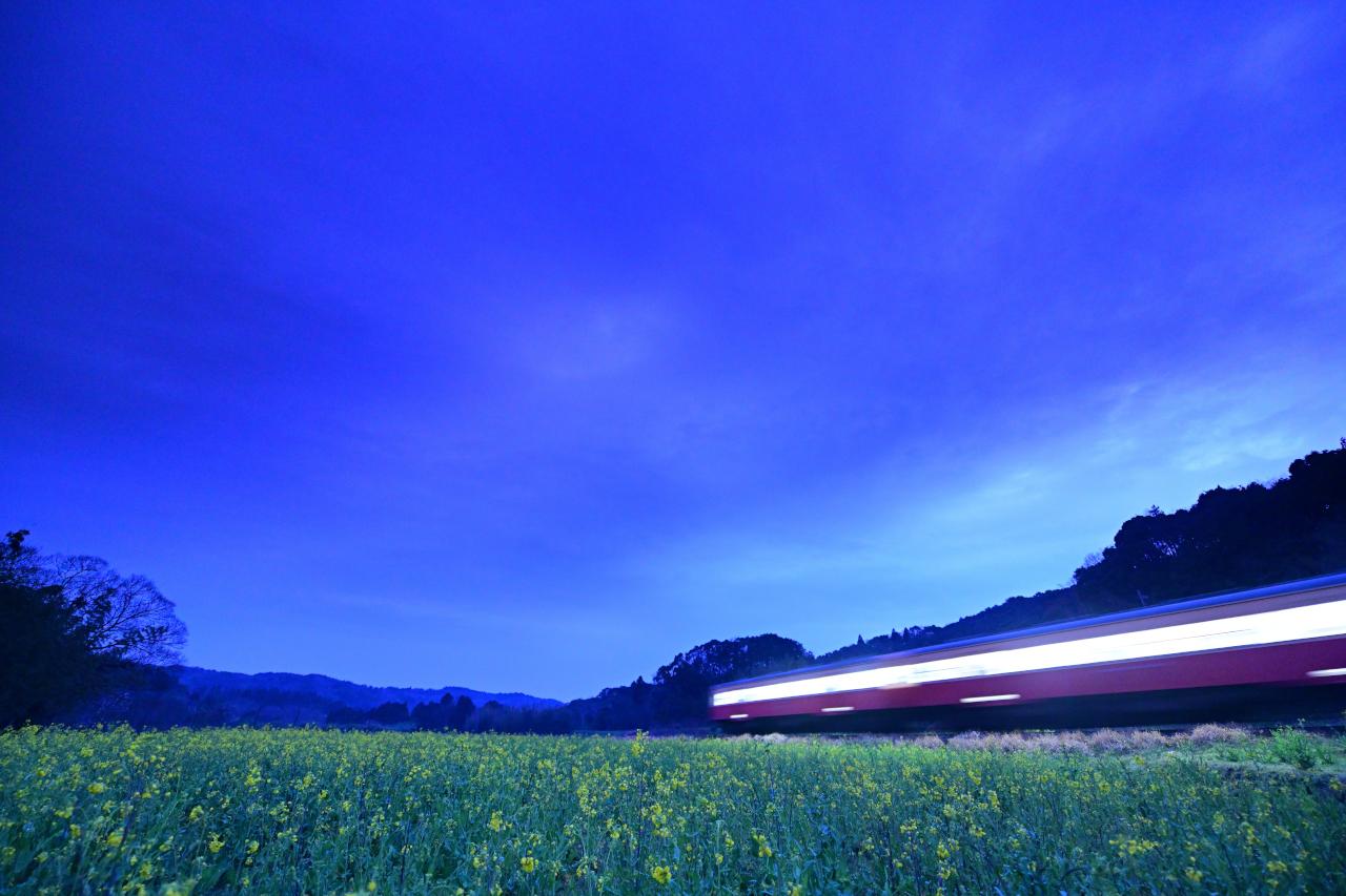NIKON Z 7+AF-S NIKKOR 14-24mm f/2.8G ED 14mm F2.8 1/6秒 ISO3200 「夜の撮影です。ホワイトバランスを蛍光灯にし、青のコクを出しています。また、空が明るいと印象が悪くなるので、ハーフNDを使って、花を浮かび上がらせています」(助川さん)