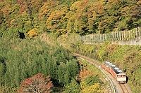 mountain, traveling, forest, lush, hillside, highland