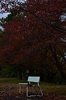 tree, outdoor, plant, park