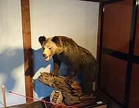 indoor, standing, mammal, bear, animal, cat, zoo, wildlife, lion