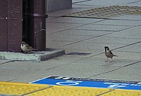 outdoor, bird, animal