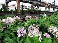 outdoor, flower, garden, plant, bushes