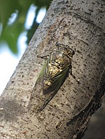 tree, outdoor, animal, insect, invertebrate