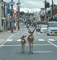 road, outdoor, street, sky, vehicle, land vehicle, car, way, city, mammal, animal, busy, town, sidewalk